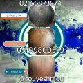 تقویت پیاز موی سر