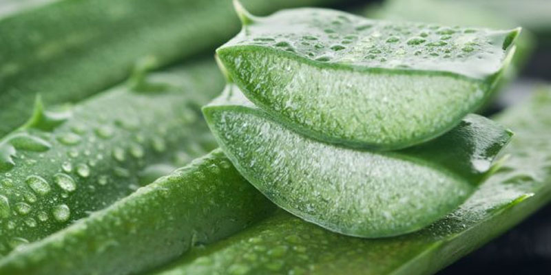 6-Amazing-Benefits-of-Aloe-Vera-for-Hair-Skin-Weight-Loss-indialivetoday-2.jpg