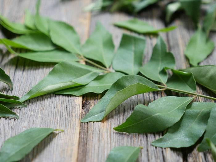 curry leaves 1 - ۱۲ سبزی شگفت انگیز برای رشد مو